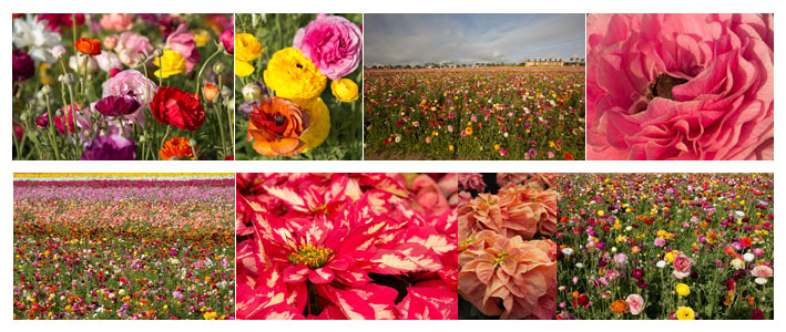 My Artist Loft Flower Fields Photography Workshop
